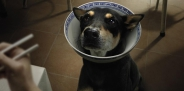 1551205-r3l8t8d-650-unidog-beg-for-life-dog-bowl-2-1024-36571
