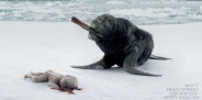 humans-for-animals-seal